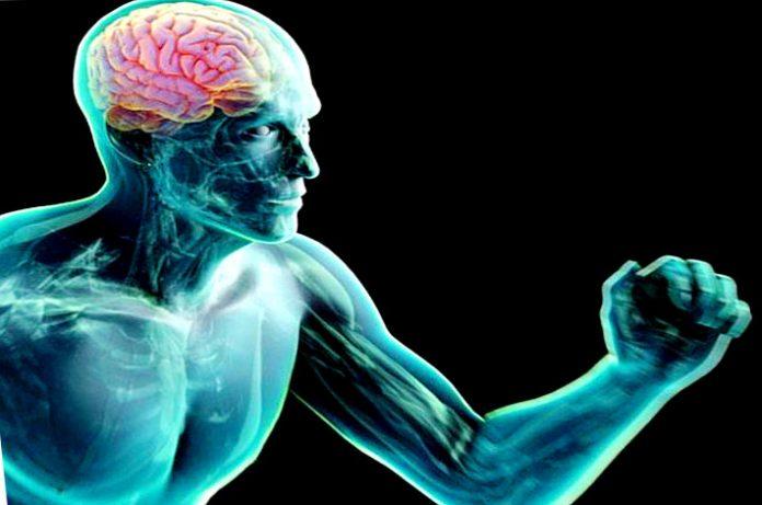 Con musculo y ejercicio desarrolla tus neuronas